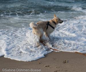 Anjo am Meer